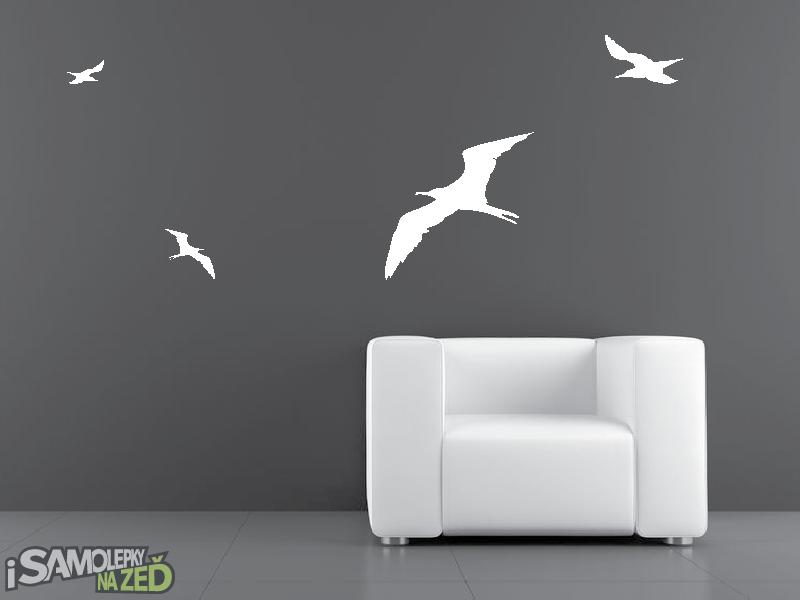 Samolepky na zeď - Ptáci