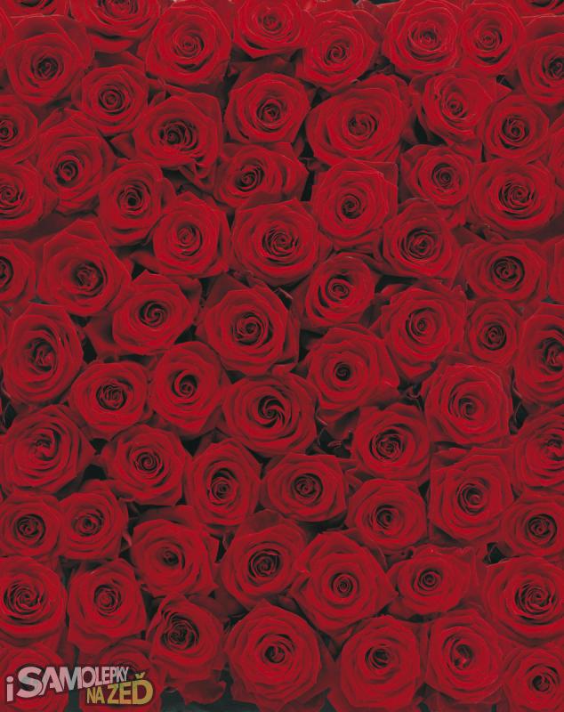 Fototapety - Fototapeta - Růže