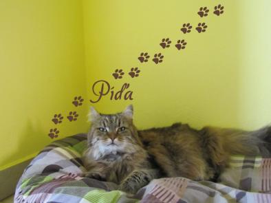 Samolepka na zeď - Kočičí tlapky